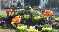 Das Foto zeigt Auszubildende des DBM beim Bepflanzen des Wilhelmplatzes für den Marburger Frühling.