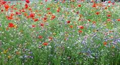 Das Foto zeigt eine bunte Blumeninsel auf einer Verkehrsinsel.