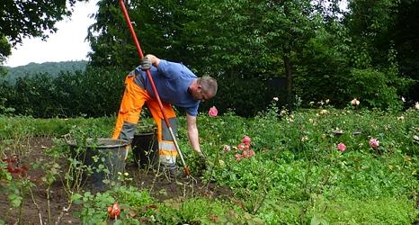 Das Foto zeigt einen Gärtner mit Hacke beim Entfernen von Wildkräutern.©DBM, Sonja Stender