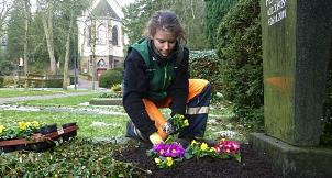 Das Foto zeigt eine Gärtnerin des DBM beim Bepflanzen eines Grabes mit Primeln.©DBM, Sonja Stender