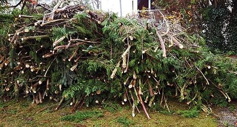 Das Foto zeigt die aufeinander geschichteten Äste eines Nadelbaums.©DBM