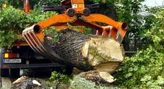 Das Foto zeigt das Verladen eines Baumstamms.