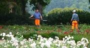 Das Foto zeigt zwei Gärtner des im Rosengarten bei der Arbeit.