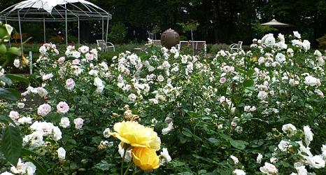 Das Foto zeigt blühende Rosenbeete mit dem neuen Pavillon im Hintergrund.©DBM, Sonja Stender