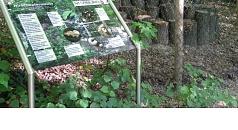 Das Foto zeigt eine Schautafel auf dem Dammelsberg.