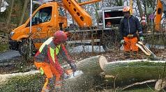 Das Foto zeigt David Pitzer und Jeremy Müller beim Zersägen eines umgestürzten Ahornbaums im Gisonenweg.