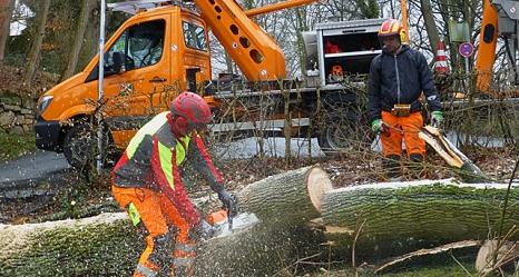 Das Foto zeigt David Pitzer und Jeremy Müller beim Zersägen eines umgestürzten Ahornbaums im Gisonenweg.©DBM, Sonja Stender