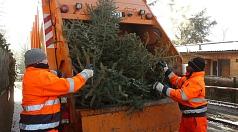 Das Foto zeigt Mitarbeiter des DBM beim Laden von Weihnachtsbäumen.