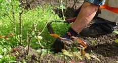 Das Foto zeigt das entfernen von Wildkräutern mit Hand und Ziehhacke.©DBM, Sonja Stender